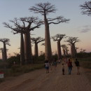 Study Abroad Reviews for SIT Study Abroad: Madagascar - Traditional Medicine and Health Care Systems - Summer