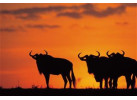 Southern African Circuit: 32-Day Cultural & Wildlife Adventure