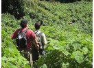 8 Day - Gorillas in the Virungas and Bwindi