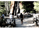 Enjoy A Journey Around Majestic California: The Pacific, Redwoods & Yosemite for 8 Days