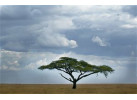 Essence of Tanzania