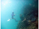 Palau Snorkeling and Sea Kayaking: Experience the Natural History Paradise of the Rock Islands