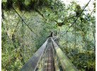 Borneo - Into the Heart of the Rainforest