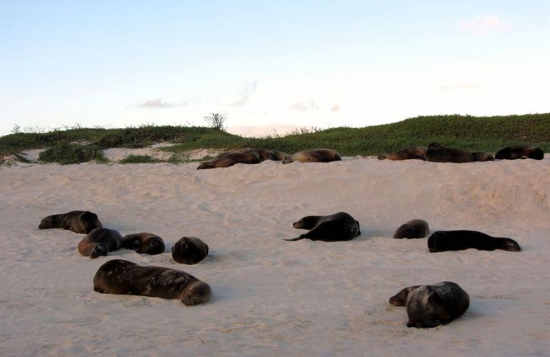 Voyage Galapagos: 7-Day G3 Cruise & Wildlife Adventure in Central Islands