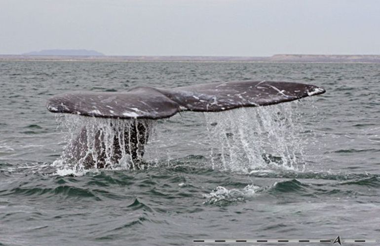 The Extraordinary Whales of Baja