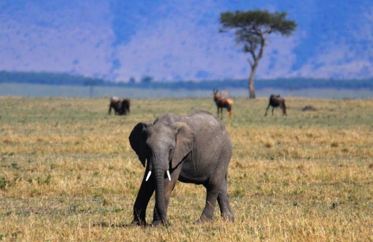 The Micato Grand Safari: The Pinnacle of Luxury Safari Adventure