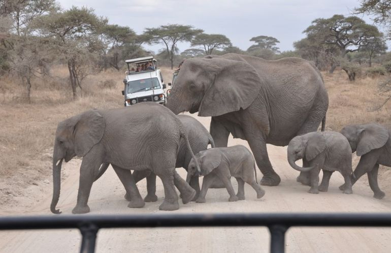 Search out and photograph diverse wildlife in Tarangire Safari Experience
