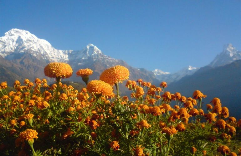 Annapurna Mountains & Wildlife