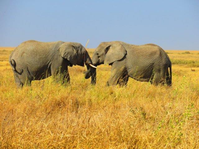 Masai Mara & Serengeti Tour