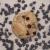 After Dark Cookies presents the Vegan Chocolate Chip cookie