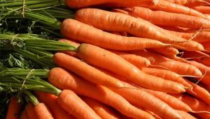 French carrot