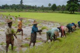 Myanmar farming