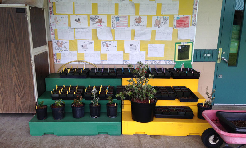 planting and transplanting