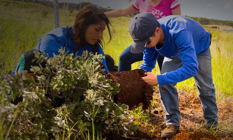 ʻŌhia outplanting 2014