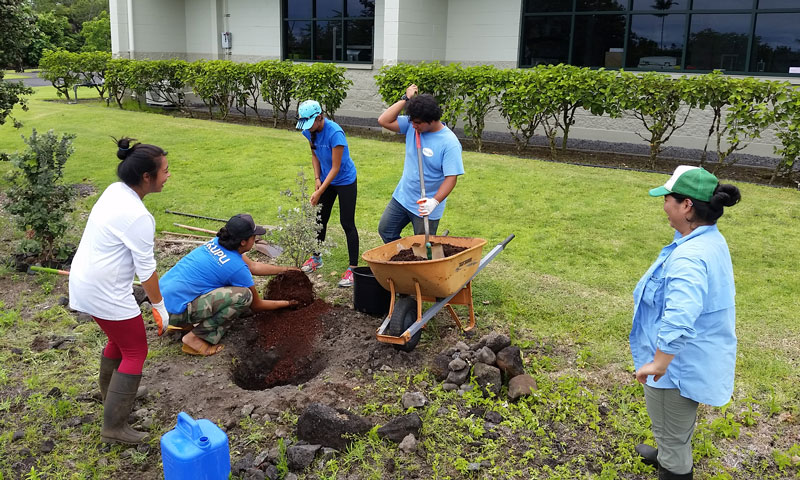 Kupu Intern tending to ʻōhiʻa at Kupuaʻe