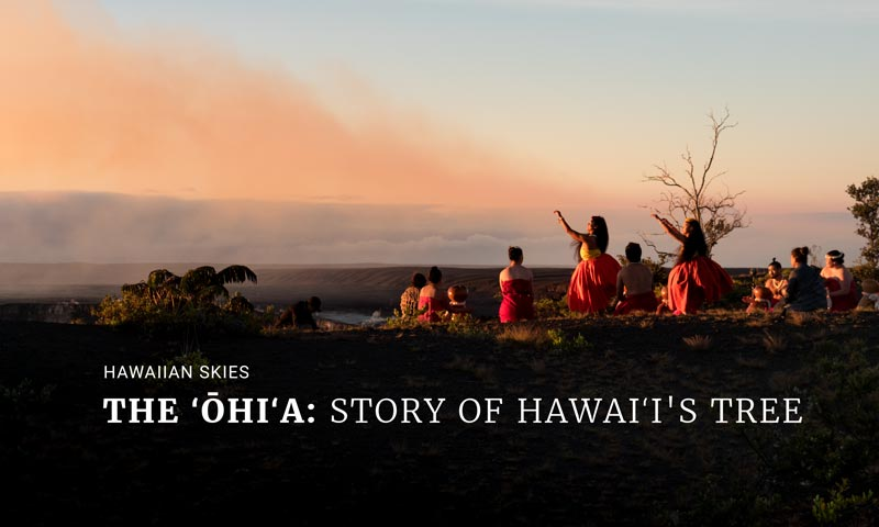 The ʻŌhiʻa: Story of Hawaiʻi's Tree