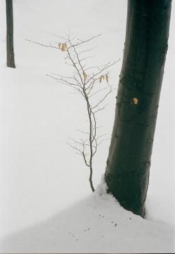 Landscape - 001 CE