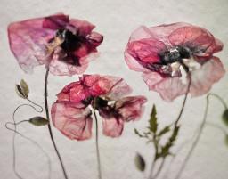 Still Flower 2