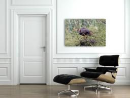 Composizione armoniosa nel nido dell'airone rosso