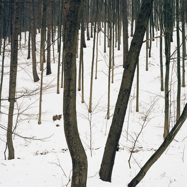 Landscape - 003 AL