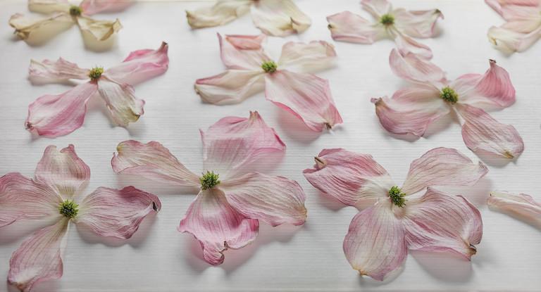 Still Flower 3