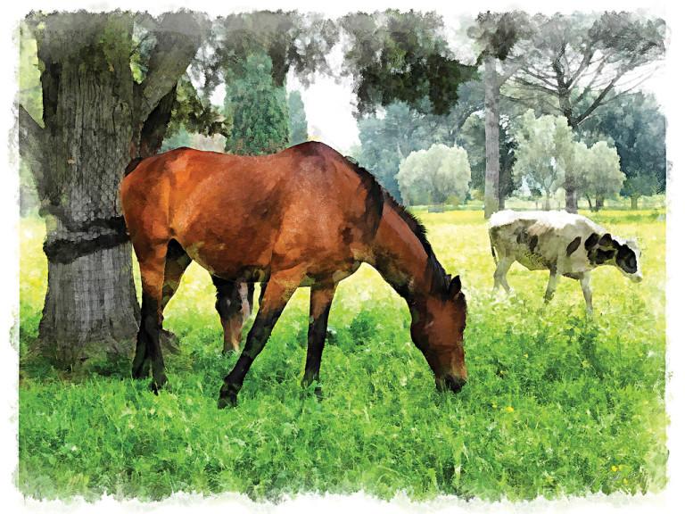 Cavalli e vitella al pascolo