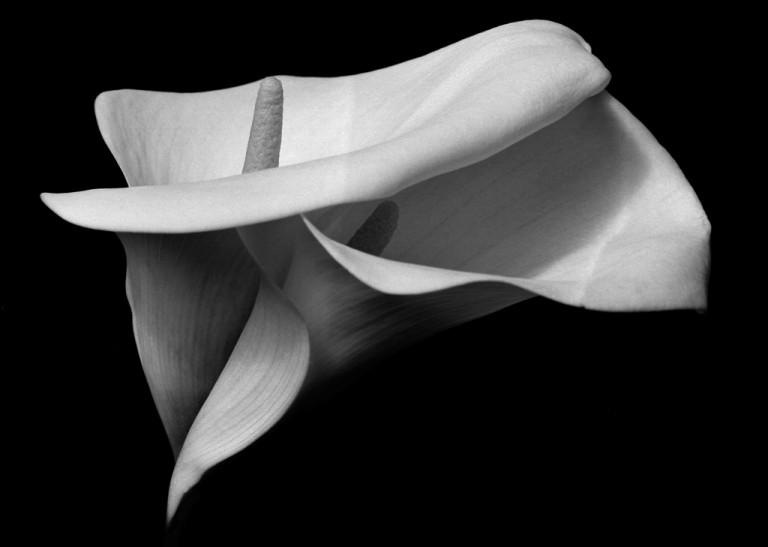 Soul shapes #2