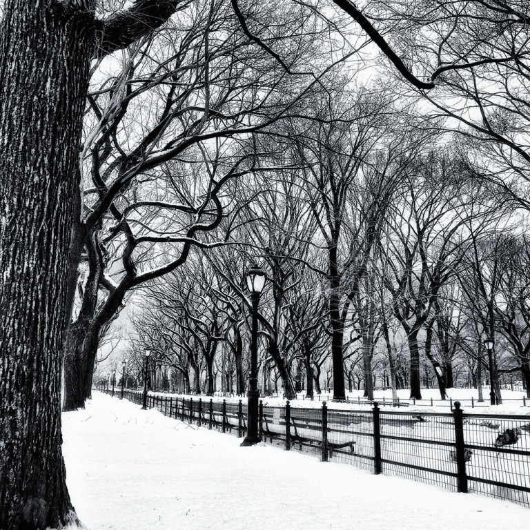 Streetlight and trees in the park