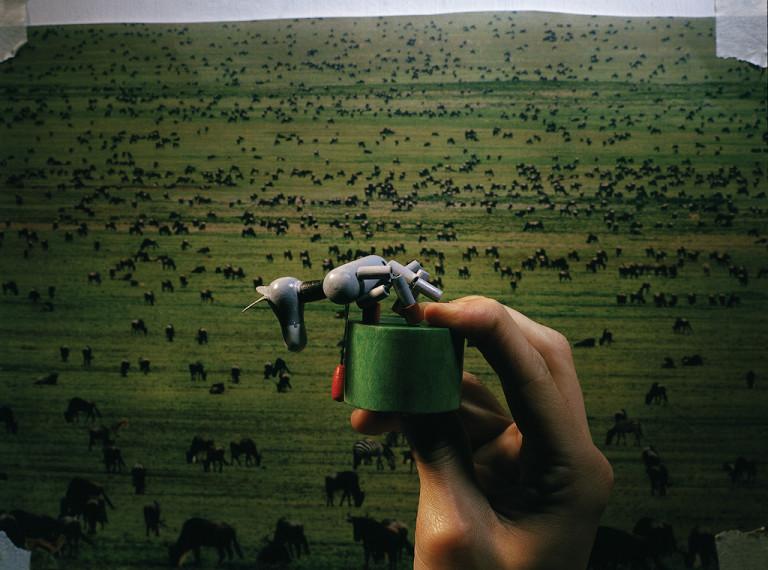 Buffalo (Savana's dream)
