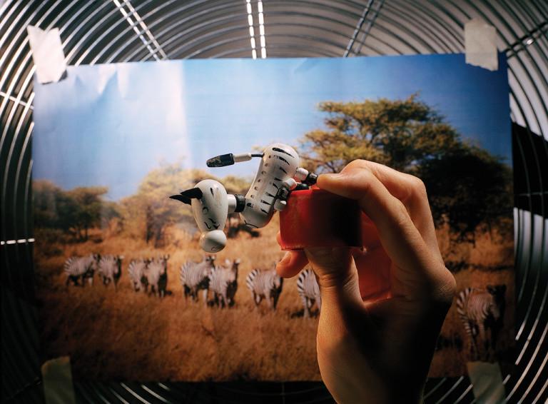 Zebre (Savana's dream)