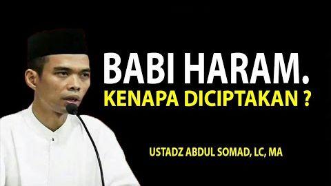 Babi Haram, Kenapa Allah Menciptakan ? Ustadz Abdul Somad, Lc. MA