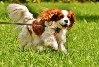 Popular Indoor Chubby Adorable Dog - dog-1610937_960_720_wbqw0h  2018_101910  .jpg