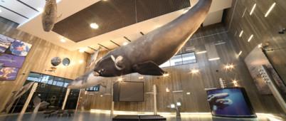 Muzeum velryb na Madeiře - http://www.museudabaleia.org/