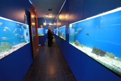 Baška akvárium - http://www.akvarij-baska.com.hr/