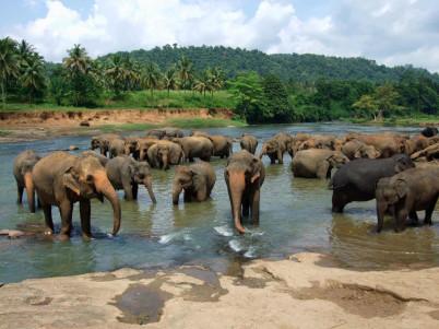 Sloní sirotčinec Pinnawala  - https://www.flickr.com/photos/lakpura/15772321895/
