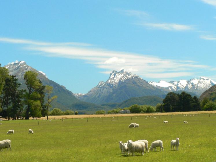 Pastviny Nového Zélandu