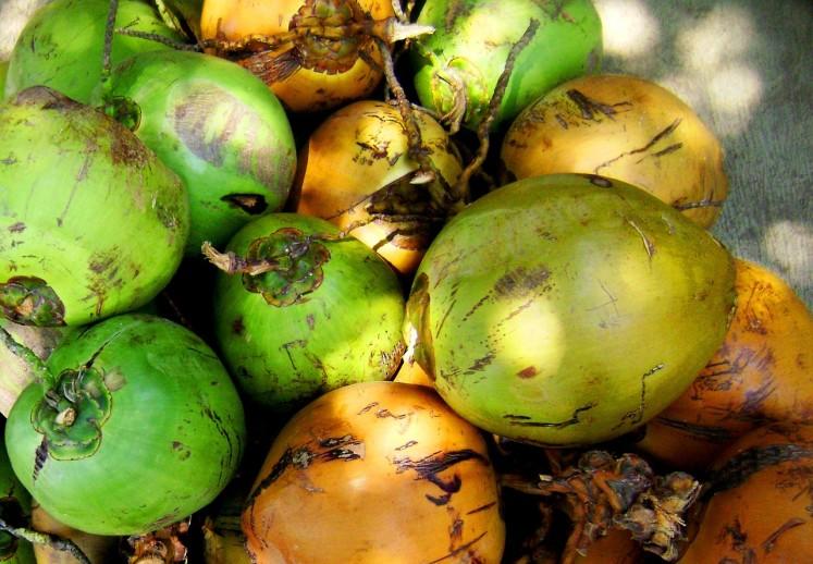 Osvěžující kokosy různého stáří symbolizující exotiku