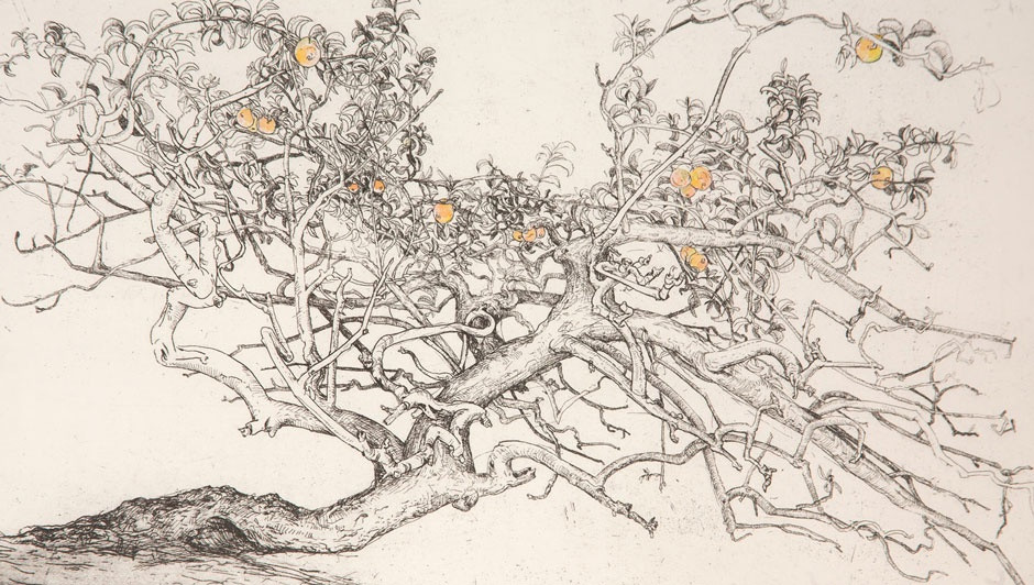 IAN WESTACOTT  Apple Tree, Sweden  etching