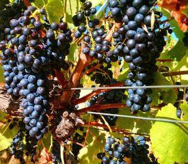 Hotham Winery & Accommodation, Wandering WA