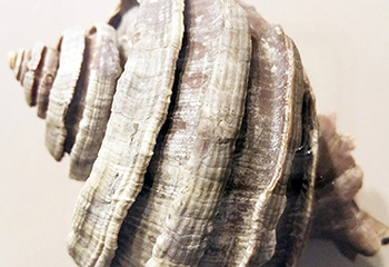 Florida's Fossils and Original Shell People