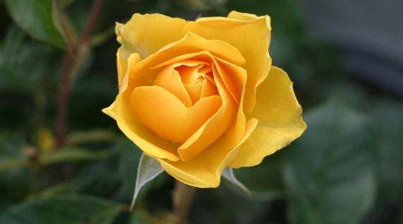 Mencintai Rasulullah Berbalut Taqwa