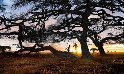 pohon tumbang pariaman