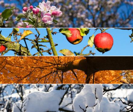 Apprendre les saisons fran ais pr coce - Saisons de l annee ...