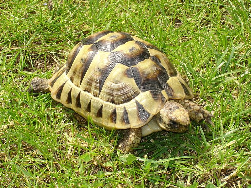 Test vocabulaire les animaux en fran ais - Images tortue ...