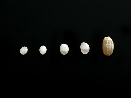 各種精米步合的酒米