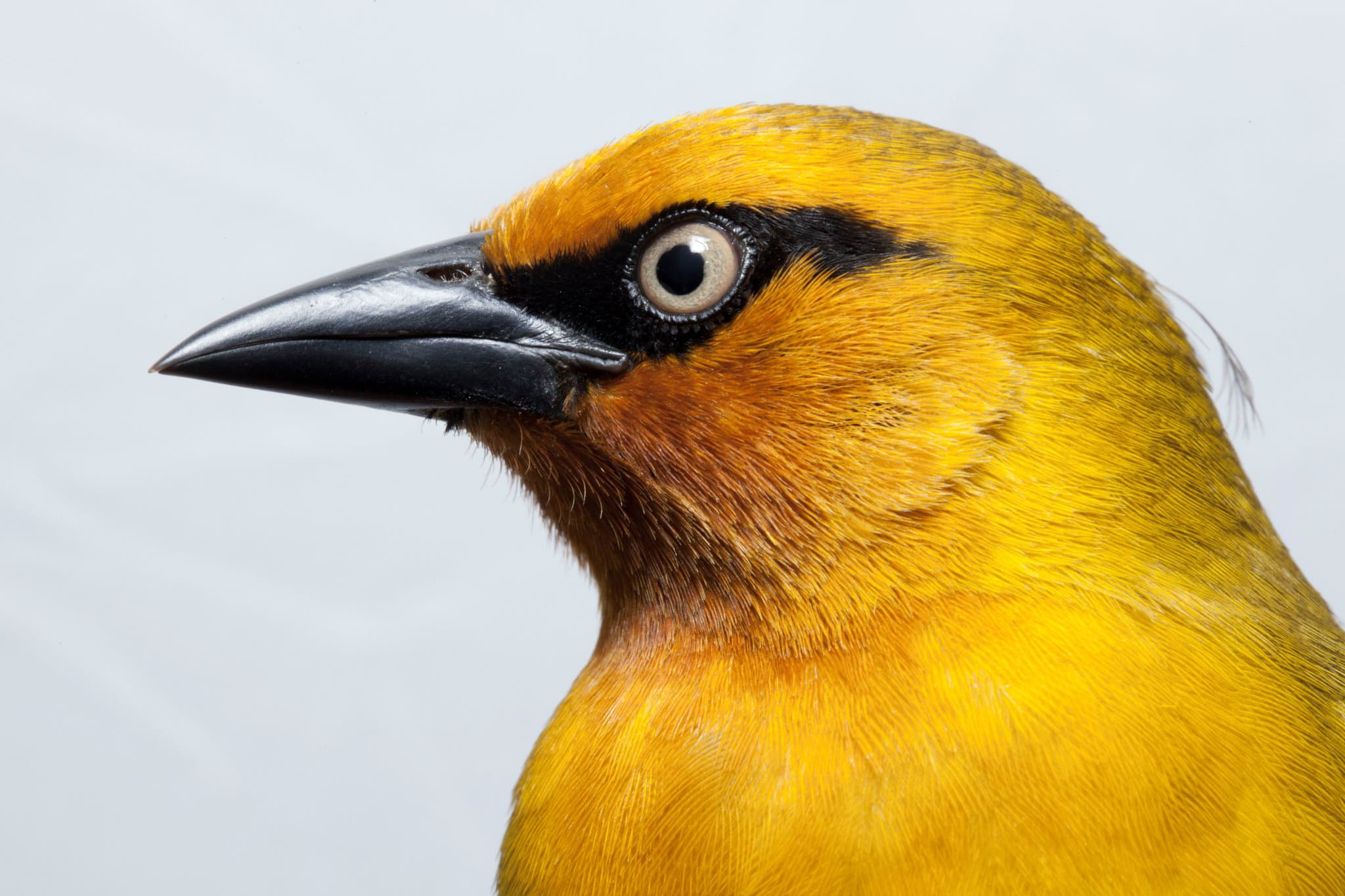 Field Museum Zoology