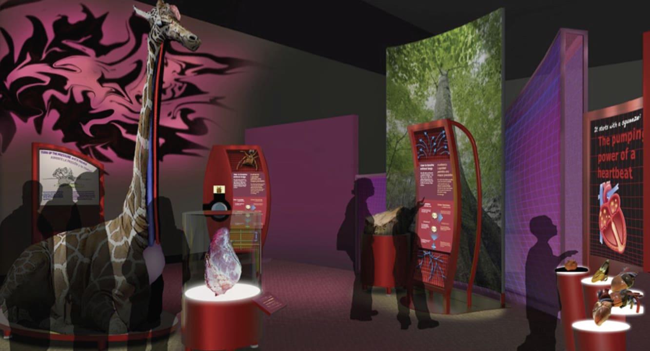 Field Museum Biomechanics