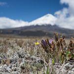 Ecuador-Blog-2014-51
