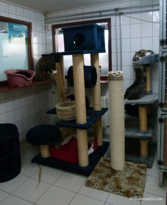 Cat Boat Shelter Amsterdam