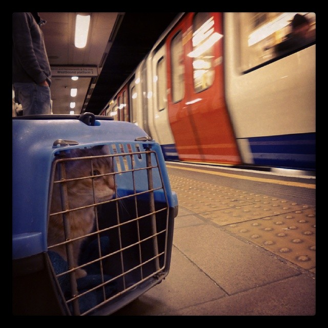 Tweasel on the tube